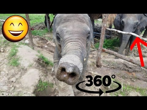 Elephant Sanctuary in Thailand!! - 360 Degree Video!