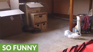 Ferret and bunny rabbit share unusual friendship