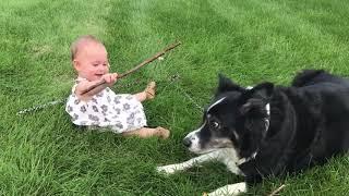 Милые Детки||Сладкие моменты между младенцами и домашними животными