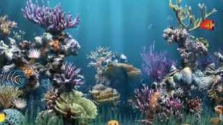 А рыбы в море...(Моему внуку. 01.07.2013г. Все права на публикуемые материалы -. фотографии, музыка и текстовые материалы принадле..., 2013-07-02T03:26:06.000Z)