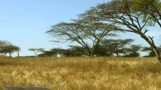 Tir à l'arc vidéo   Animaux savane