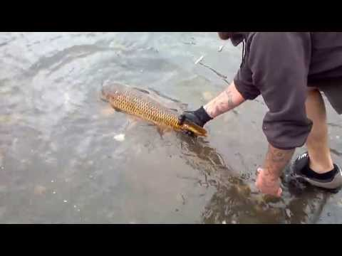 huge carp in mohawk river