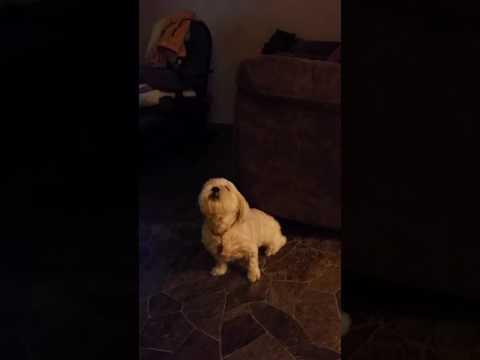 Butt scratching dog