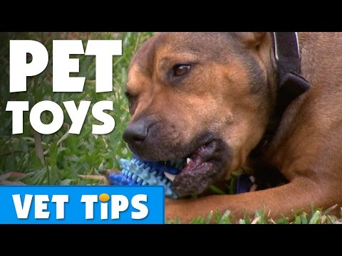 How To Choose The Best Toy For Your Dog | Bondi Vet
