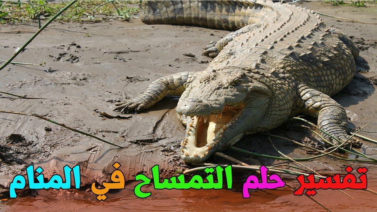 حلم التمساح للمتزوجة والعزباء التمساح في المنام للمرأة والرجل تفسير التمساح يلاحقني Youtube