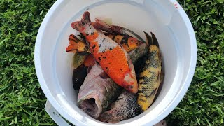 THEFT DESTROYED MY $25,000 Fish Collection(what Happened)
