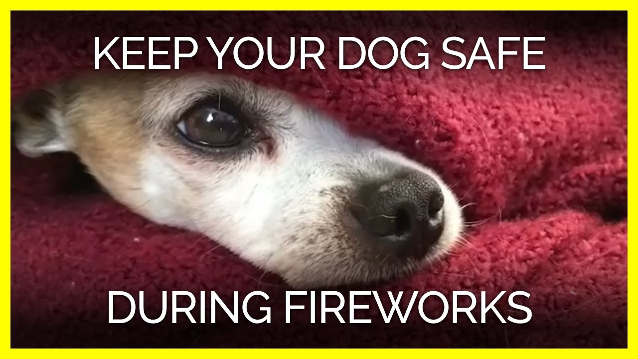 Help Keep Your Dog Safe And Comfortable During Fireworks