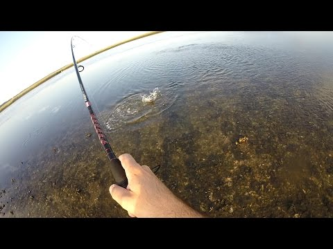 Kayak Fishing JAX, FL. There he is!