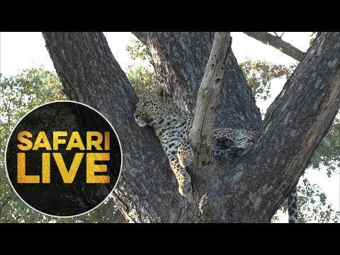 safariLIVE - Sunset Safari - May, 15. 2018