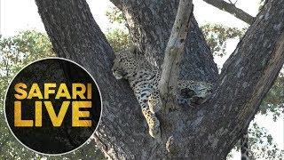 safariLIVE - Sunset Safari - May, 15. 2018 thumbnail