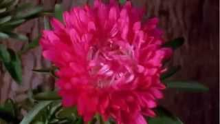 цветы на видео