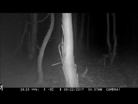 Henry's Wood Trail Camera By Keith H  Burgess