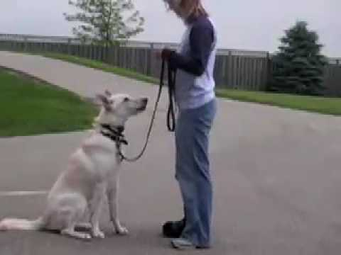 Our New Review: ieGeek Dog Training Collar with Remote, Rechargeable and Waterproof Dog Trainer... from YouTube · Duration:  2 minutes 27 seconds
