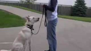 How To Use A Remote Collar Teddy's Story