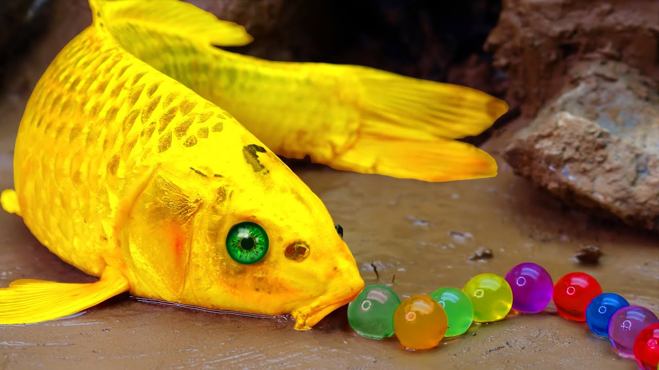 Download Stop Motion Gold Fish ASMR - Unbelievable fishing Trap Primitive Experiment Cooking Underground