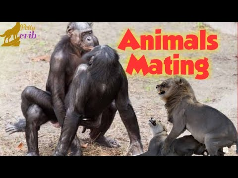 Download ANIMALS MATING COMPILATION