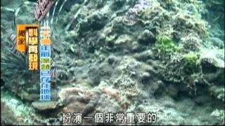 地球環境守護者 藻類大解密-民視新聞
