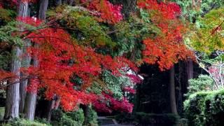 京都府亀岡市の山麓にある、隠れた紅葉の名所です。