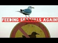 Feeding seagulls hot chilli sausuge part 3