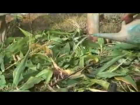 Organic Farming in South India
