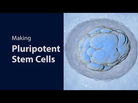 Making Pluripotent Stem Cells