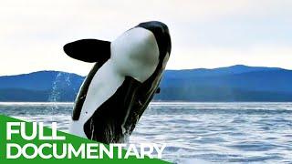 Cascadia - A Place Where Giants Roam   Free Documentary Nature