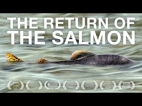 The Return Of The Salmon 2016