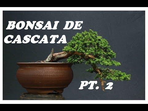 COMO FAZER BONSAI NO ESTILO CASCATA (KENGAI) Pt. 2