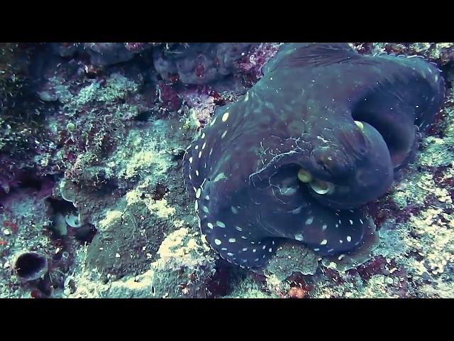 Рыбы, медузы и осьминожки