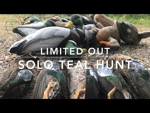 Limiting Out! Solo Duck Hunting Iowa Public Land
