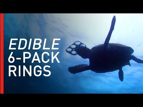 Craig Stevens -  Biodegradable, Edible 6 Pack Rings To Reduce Ocean Plastic