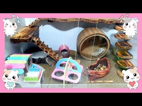Set Up New DIY Hamster Cage - Hamster's Kingdom