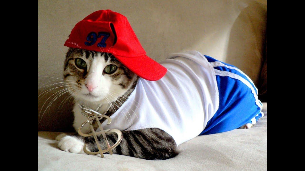 el gato que baila rap - YouTube