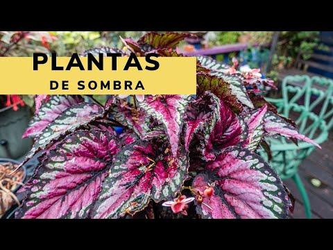 Plantas de sombra - Bricomanía - Jardinatis
