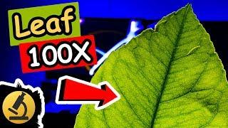 Leaf Under the Microscope - Lemon Tree - [1080p Full HD]