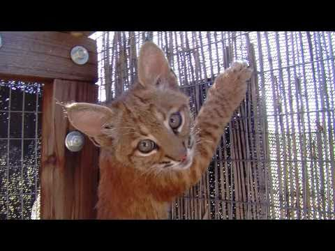 """""""We Are Tucson Wildlife Center"""" - start of our monthly film series"""