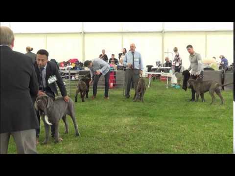 East England Dog Show 2015