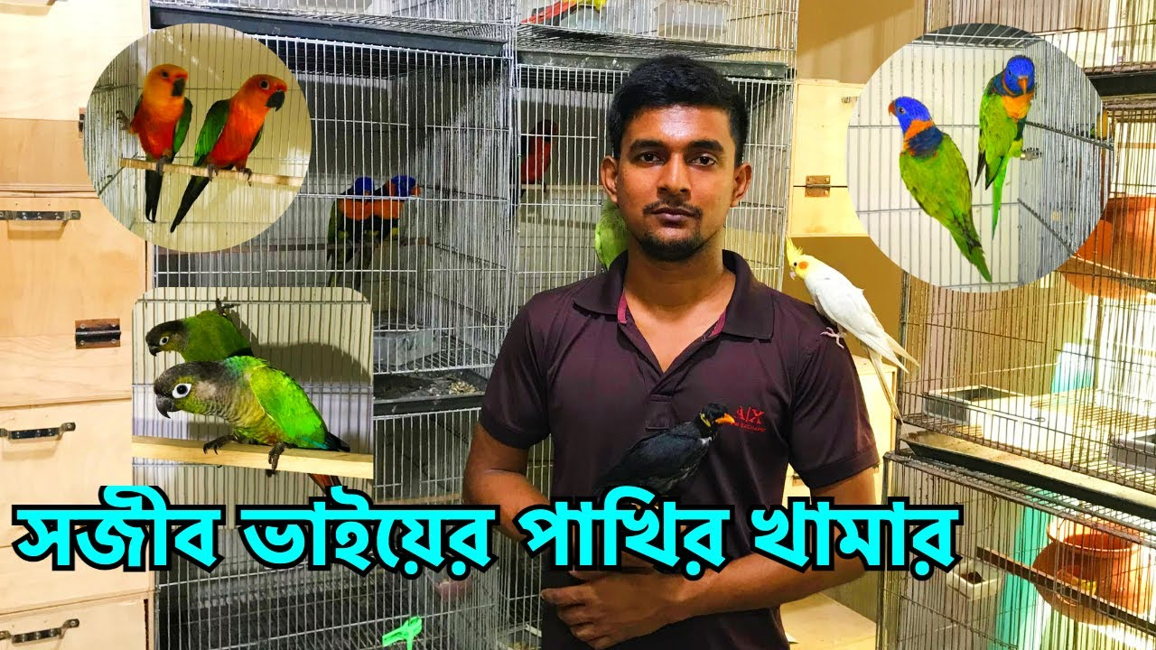 সফল খামারি সজীব ভাইয়ের পাখির খামার   Bingo Pets   Successful Bird Breeder in Tongi, Gazipur (V -283)