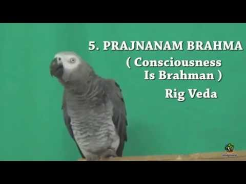 Ram, the African Grey Parrot says the Maha Vakyas