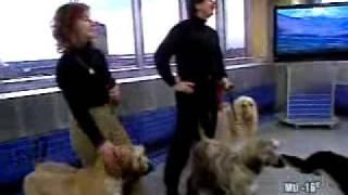 Voyez Aline, Lucie, Christian, Alain ainsi que quelque chiens de l'...