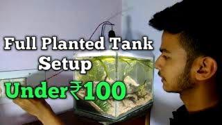 Full Planted tank setup under ₹100