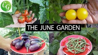 The California Garden In June - Tomatoes, Grapes & More! - in 4K