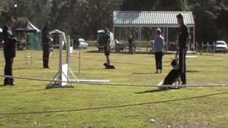 Qld State Obedience Trials 2009 Open