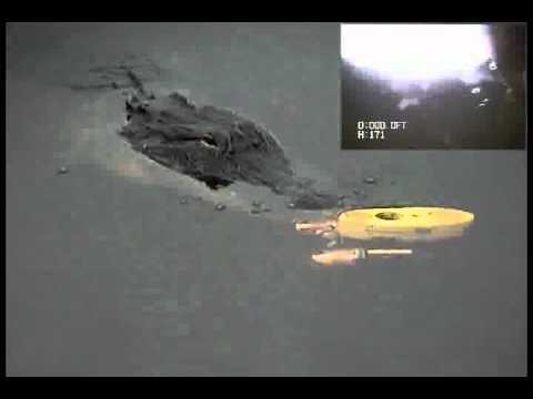 VIDEORAY - MARINE LIFE OBSERVATION Alligator Encounter