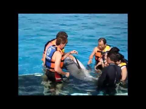 A Day at Sea Life Park Oahu Hawaii