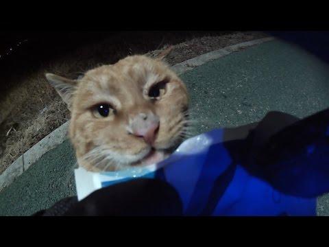 잠자는 치즈 길고양이 깨우면 셔틀을 공격할까? cat attack me? – 관찰남