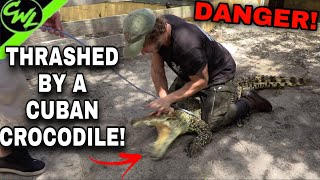 THRASHED BY A CUBAN CROCODILE!!!