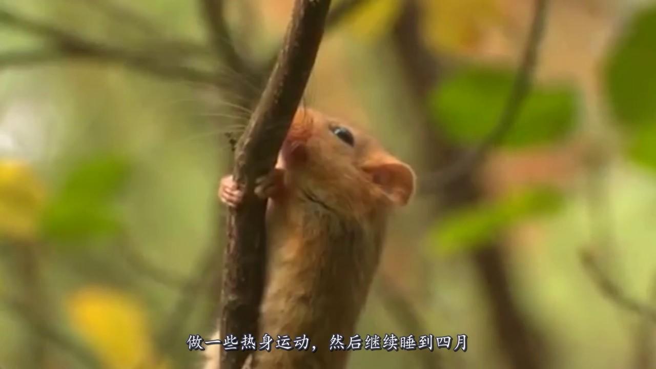 史上冬眠最長的動物。一生中9個月都在睡覺。太不可思議了! - YouTube