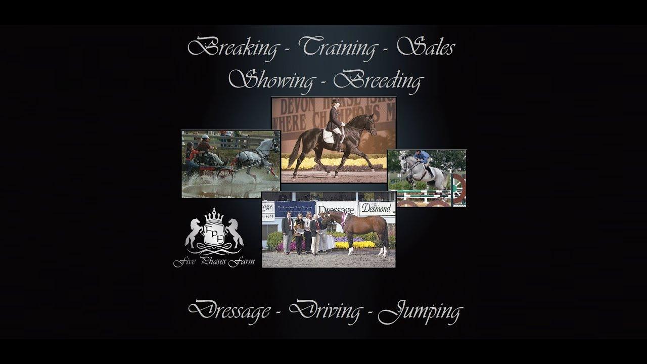 Ocala's Finest Equestrian Training Facility | Five Phases Farm