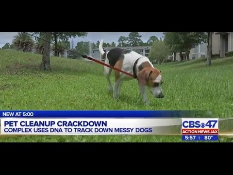 Jacksonville apartments to use dog DNA testing in pet-poop policy